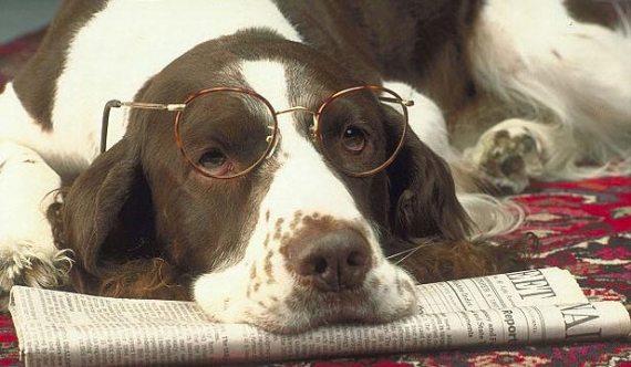 Anjing Baca Koran