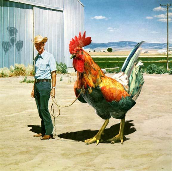 Ayam Raksasa