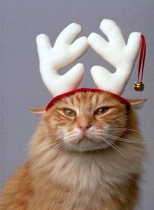 Kucing Menyamar Menjadi Rusa
