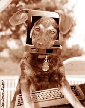 Anjing Cyber