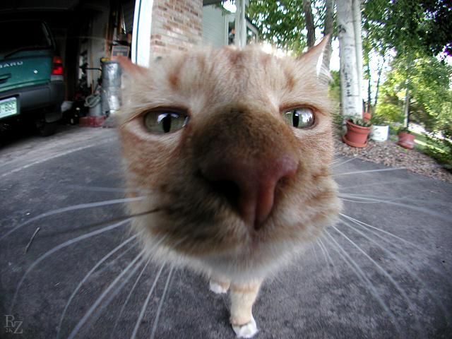Si Kucing Hidung Belang