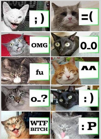 Emoticon Kucing