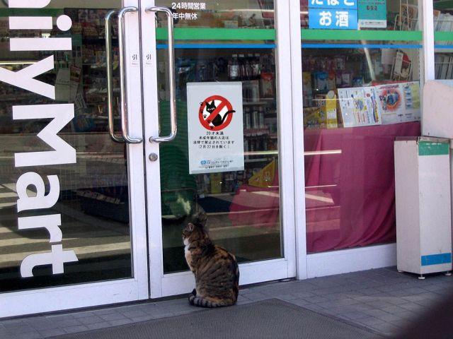 Hewan Dilarang Masuk Minimarket