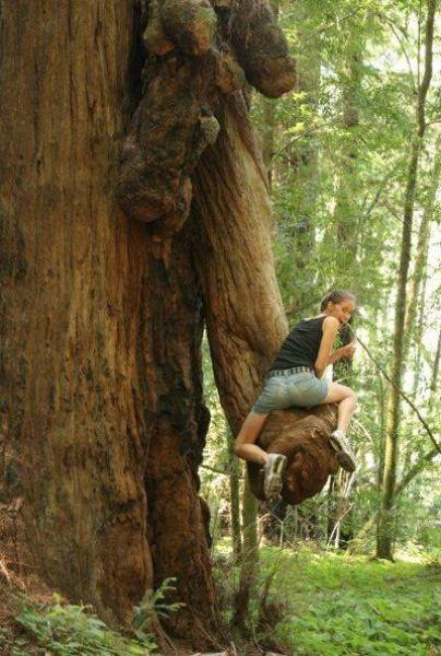 Merangsang Pohon Agar Berbuah