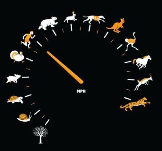 Spedometer Manusia dan Hewan