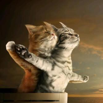 Titanic Versi Kucing