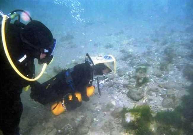 Menyelam dengan Anjing Laut