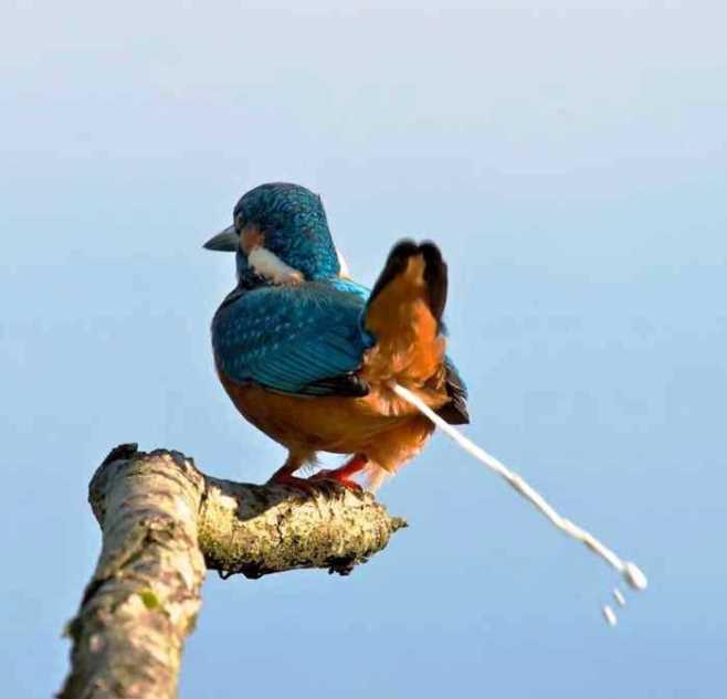 Burung Ngecrot
