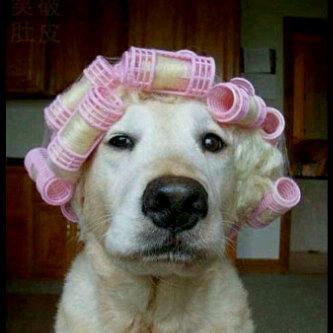 Anjing Mau ke Pesta