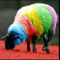 Domba Rainbow