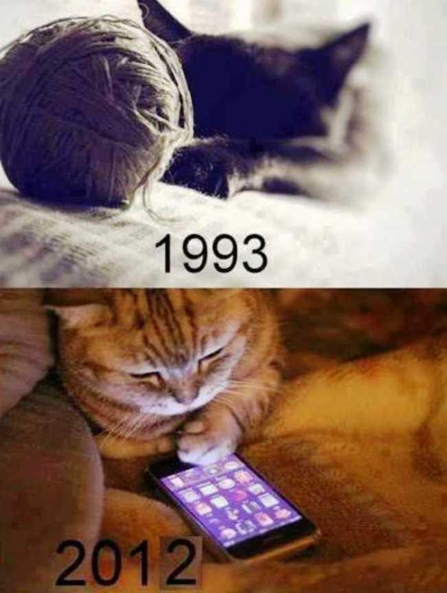 Perbedaan Kucing Tahun 1993 dan 2012