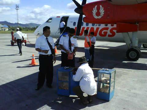 Pilot Lapar Banget