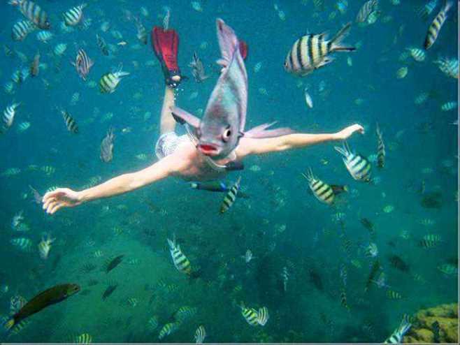 Arti Muka Ikan