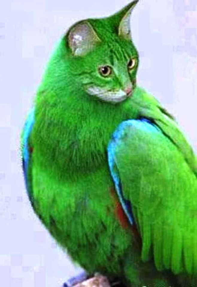 Separuh Aku Kucing dan Burung | Gambar Lucu