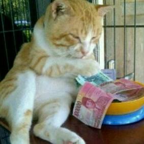 Kucing Suka Duit