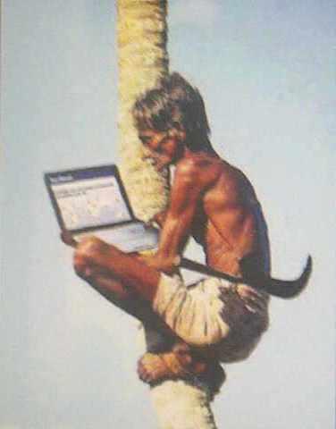 Main Facebook di Atas Pohon Kelapa